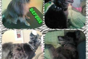Photo #6: Natural dog grooming