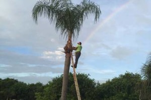 Photo #1: CANCUN LAWN AND TREE SERVICE
