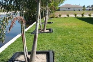 Photo #8: MARTINEZ LANDSCAPING