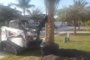 Photo #2: MARTINEZ LANDSCAPING