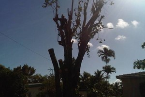 Photo #4: Done Right Tree Service