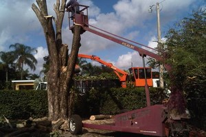Photo #3: Done Right Tree Service