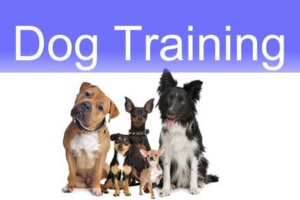 Photo #1: Animal Choice Puppy Boot Camp