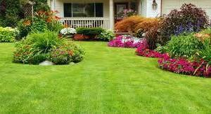 Photo #1: J&d lawn service