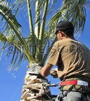 Photo #1: Gardening, Landscaping, tree trimming ETC..