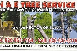 Photo #1: EMERGENCY TREE SERVICE 24/7 WORK GUARENTEE - Lic #1004927