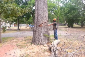 Photo #1: TREE REMOVAL PRUNNING TRIMMING PLANO ALLEN FRISCO