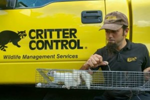 Photo #1: Critter Control