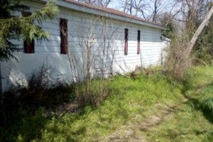 Photo #1: Brush Clearing/ Alley Cleaning