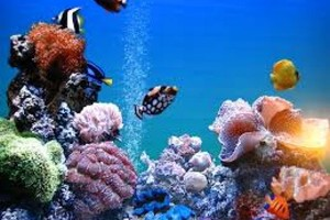 Photo #1: Bill Goody Aquariums - Best Aquarium Service & Maintenance in New York City!