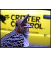 Logo Critter Control