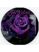 Logo Purple Velvet travleing Salon