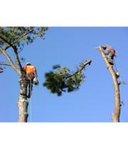 Logo MY TREEMAN TREE SERVICE