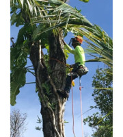 Logo Kings tree service