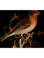 Logo Robin's Nesting Service