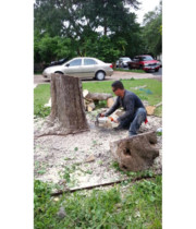 Lupe S Tree Service 1 Review Amp 12 Photos 512 799