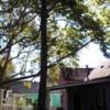Logo Hembrees tree service