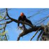 Logo Arbortech Tree Service