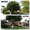 Logo McClean Tree Service & Lawn Care