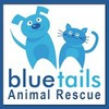 Logo Blue-Tails