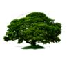 Logo Rudy's Tree Service