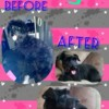 Logo EXPERIENCED Dog & CAT Grooming *UNBEATABLE PRICES!*