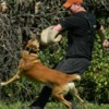 Logo Elite Dog Training