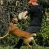Logo Elite Dog Training