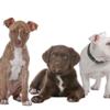 Logo Dog Days