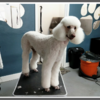 Logo Quality Pet Spot Dog Grooming