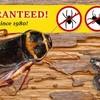 Logo Aardvark Motown Pest Control