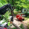 Logo Filli's Tree Service. Professional Tree Removal