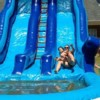 Logo Book your inflatable bounce, slide or waterslide with us!!!!