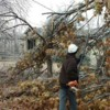 Logo TREE WORK. ICE STORM CLEAN UP