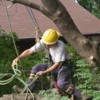 Logo Fresno Tree Services: Neighboorhood Tree Man