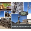 Logo MG Tree Services. EXPERTS ON TREE REMOVAL