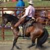 Logo Horse Training & Tune Ups by Tyler Ayler