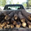 Logo Firewood! Get your firewood here! $90 delivered