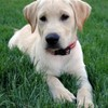 Logo Prestigious Pets - Dog Boarding & Sitting