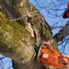 Logo Bruce's Tree Service