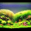 Logo AQUARIUM SERVICES AND AQUARIUM LEASING!