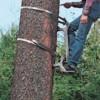 Logo Redmond Tree Service. Tree Pruning & Tree Removal