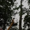 Logo POTTER TREE SERVICE. Tree Removal N Trimming