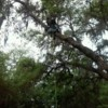 Logo Treeman David