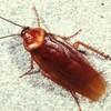 Logo Pest Control, Lawn spraying, Termites - Ed the bug man