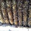 Logo Honeybee Removal Service