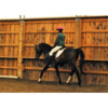 Logo Riding Lessons Focused on Enhancing the Skills of Adult Amateurs