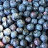 Logo BLUEBERRIES - $4.00 Qt.