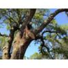 Logo Tree Climber for hire