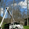Logo CLEAR CUT TREE SERVICE